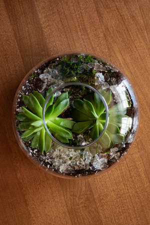 A high angle view of a houseplant in a glass vase on the table under the lights