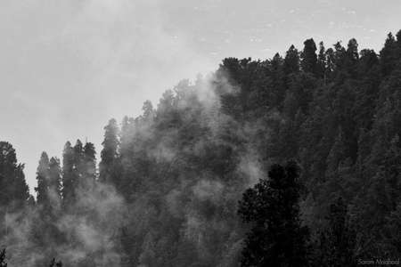 A greyscale shot of the clouds covering the forest on the mountain Stock fotó