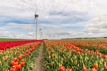 A beautiful shot of different types of a flower field with windmills in the distance