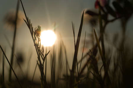 A selective focus shot of grassy field during a sunset
