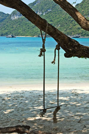 A swing hanging from a tree on the beach on an island during daytime