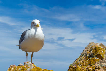 A cute seagull perched on a hill with the beautiful cloudy sky in the background