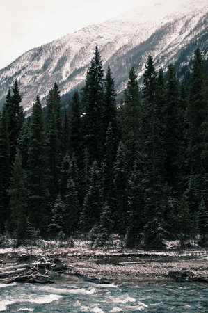 A vertical shot of the green pine trees near the river under the snowy mountains