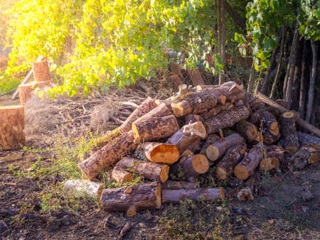 A pile of wood near green trees during daytime - deforestation concept
