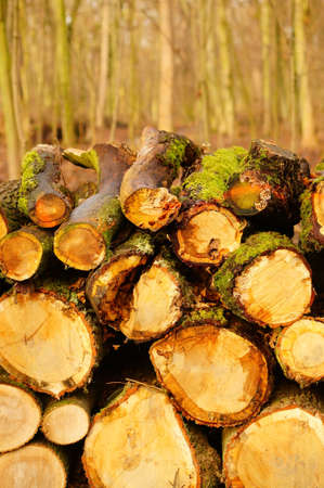 A vertical closeup shot of chopped firewoods - nature abuse concept Stock fotó