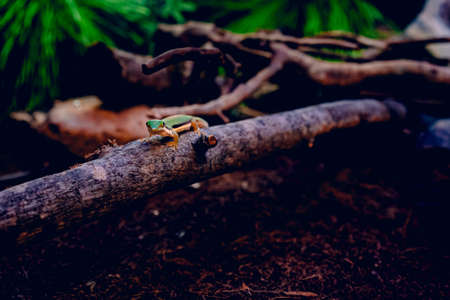 A green lizard walking on a piece of wood over brown dry leaves surrounded by tree branches