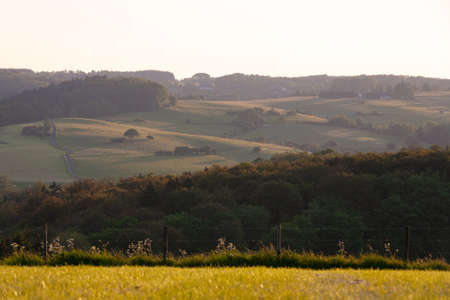 A selective focus shot of trees and a grassy hill in the distance in Eifel, Germany