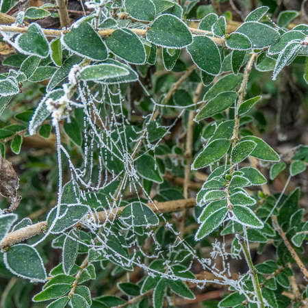 A closeup shot of a plant covered in a white and thick spider web