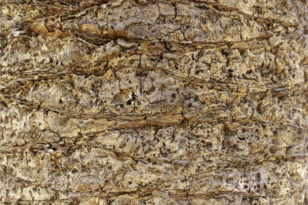 A closeup of a palm tree bark under the sunlight - a nice picture for backgrounds and wallpapers