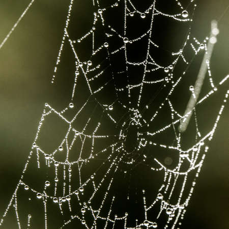 A closeup shot of a spider web with drips of water around it