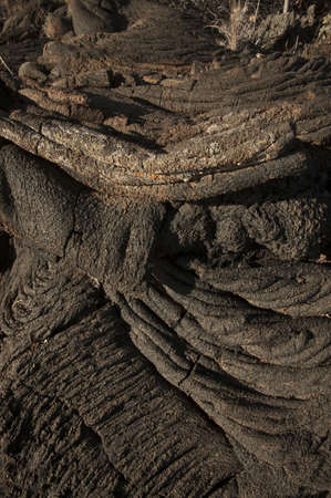 A closeup of a ground covered in tree barks and dirt under the sunlight during sunset