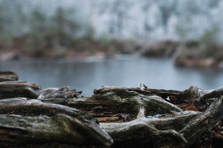 A closeup shot of tree roots near the lake on a blurred background