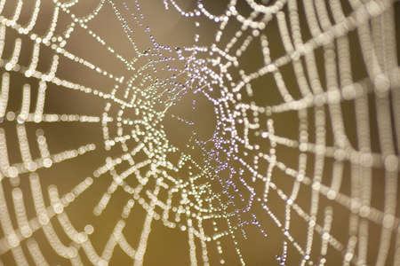 A selective focus shot of spider web with water droplets