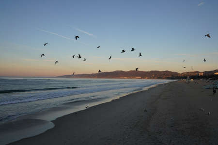 A beautiful shot of a beach with birds flying over it in a blue sky