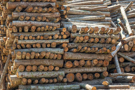 A closeup shot of many firewoods stacked on each other