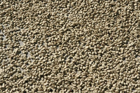 coffee beans texture background.