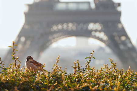 A wide angle shot of a bird sitting on the grass behind the Eiffel tower 写真素材