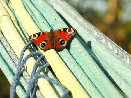 A closeup shot of a peacock butterfly resting on a yellow-turquoise green cloth with a blurred background