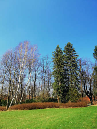 A vertical shot of grassy land and trees in the park of Jelenia Góra, Poland.