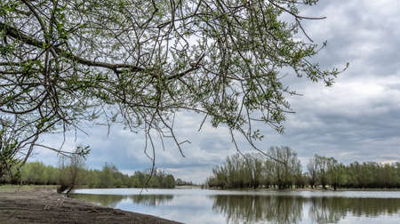 A wide angle shot of several trees growing around the water under a cloudy sky 写真素材