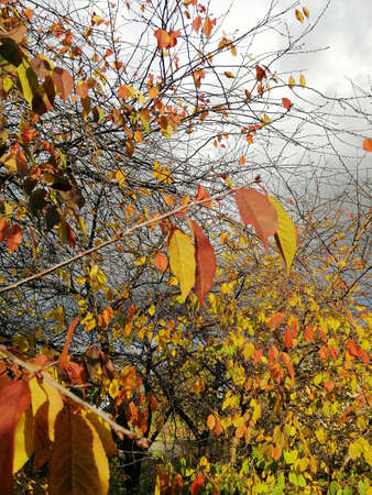 A low angle view of colorful leaves on tree branches under the sunlight and a cloudy sky