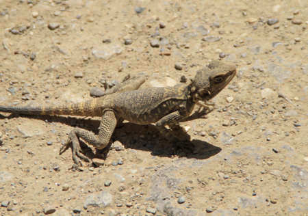 A high angle shot of a lizard standing on the ground during daytime