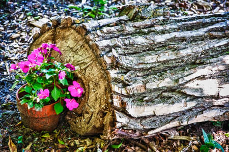 A closuep shot of a pot with beautiful pink flowers near the cut tree trunk