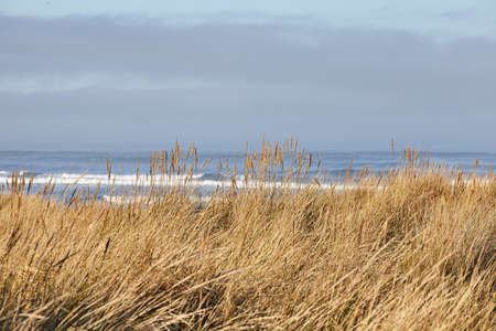 A scenery of beachgrass in the morning at Cannon Beach, Oregon