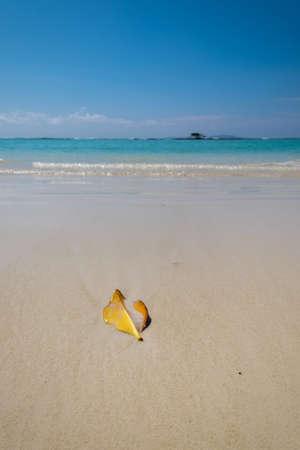 A vertical shot of a banana peel at the beach in Galapagos Islands, Ecuador 写真素材