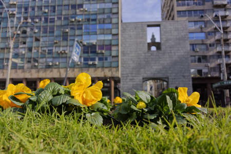 A wide angle shot of yellow flowers in front of the Plaza Independencia in Uruguay