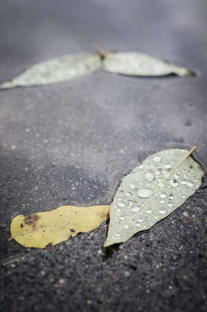 The fallen leaves on the ground on a rainy day in Autumn