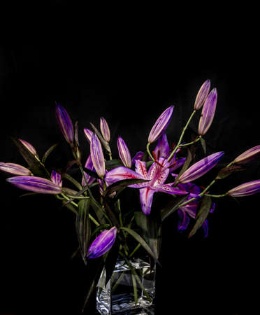 A beautiful bouquet of purple stargazer buds with one bloom in a vase isolated on black background