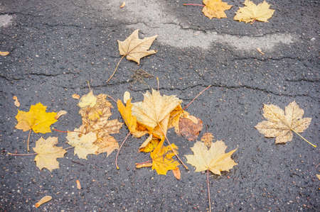 A high angle shot of yellow autumn laves on concrete ground