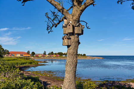 A beautiful shot of birdhouses on a tree of Baltic sea coast in Nexo, Bornholm island, Denmark