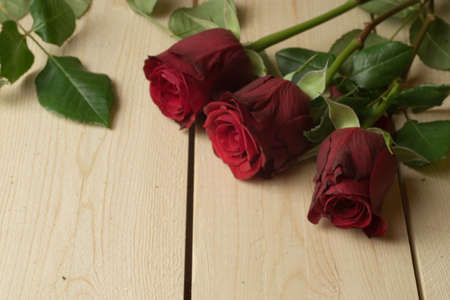 Three beautiful red roses with green leaves on a wooden surface Archivio Fotografico