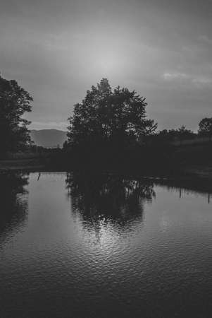 A black and white shot of a tree silhouette next to a pond