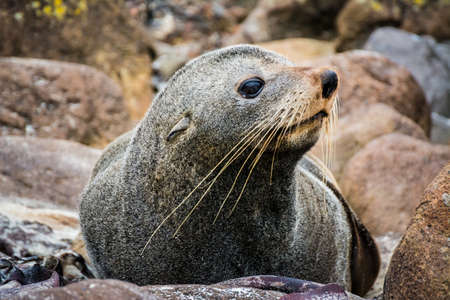 A selective focus shot of a seal on the rocks while looking aside