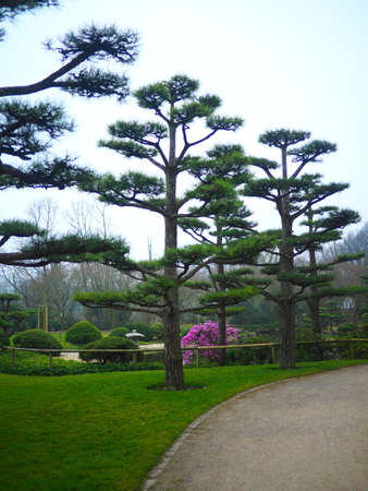 Several trees next to each other on a green landscape in the park 스톡 콘텐츠
