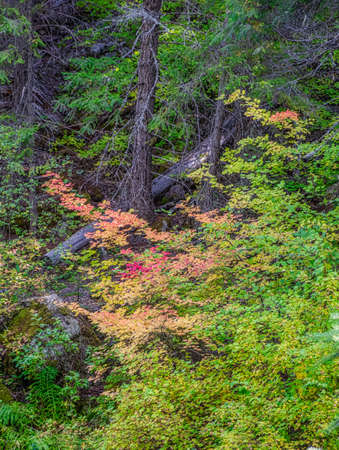 Colorful and beautiful leaves on trees in the forest 스톡 콘텐츠