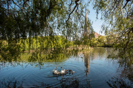 A shot of swans swimming in the pond next to a chapel