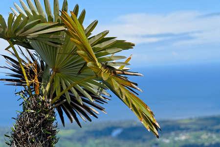 A closeup shot of a green palm tree o a blurred background 스톡 콘텐츠