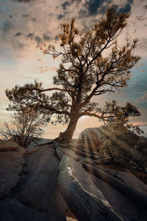 A vertical shot of an exotic tree on the top of the rock under the cloudy sunset sky
