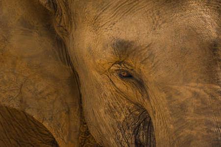 A closeup shot of an elephant's head