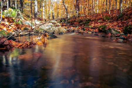 A tranquil pond in a forest with fallen branches in autumn