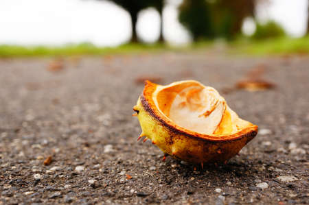 A closeup shot of the shell of a fruit  laying on the ground in a park