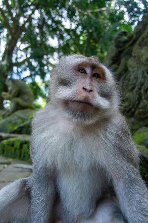 A vertical closeup shot of a cute white-fronted capuchin