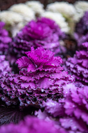 A selective focus shot of a purple plant with droplets of water with a blurred background Banco de Imagens