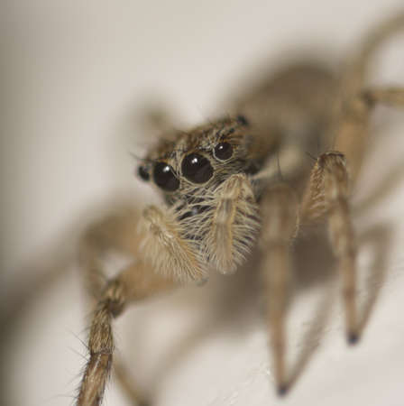 A closeup shot of a big European garden spider