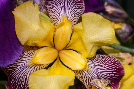 A selective focus shot of a Giardino dell iris in Lori province in Armenia