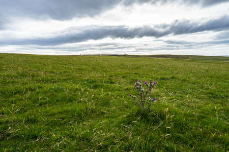 A dramatic shot of a plain with a purple flowers on a lone plant in the foreground, north of Scotland